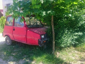 A Reliant Robin rather fittingly in a tree